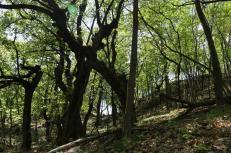 Castel Feder 3