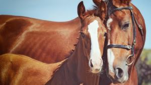Equine Mortality Coverage from Equine Insurance Specialists