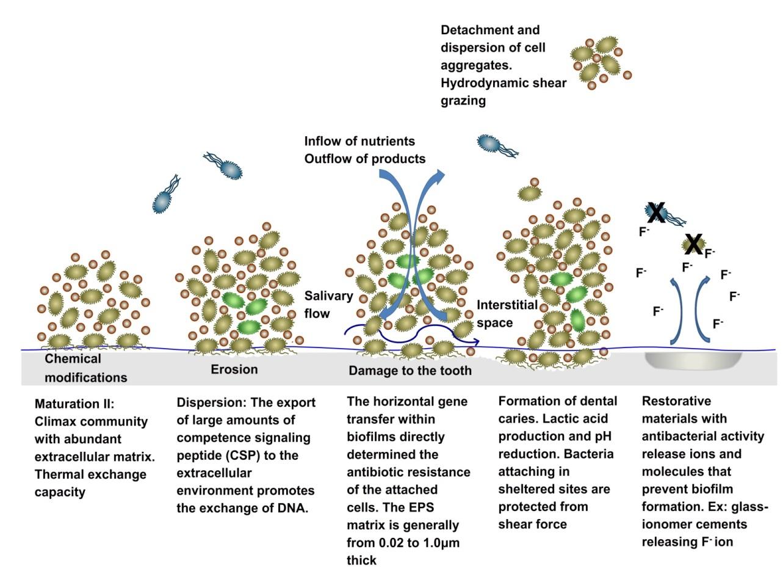 Improving Antimicrobial Activity Of Dental Restorative Materials