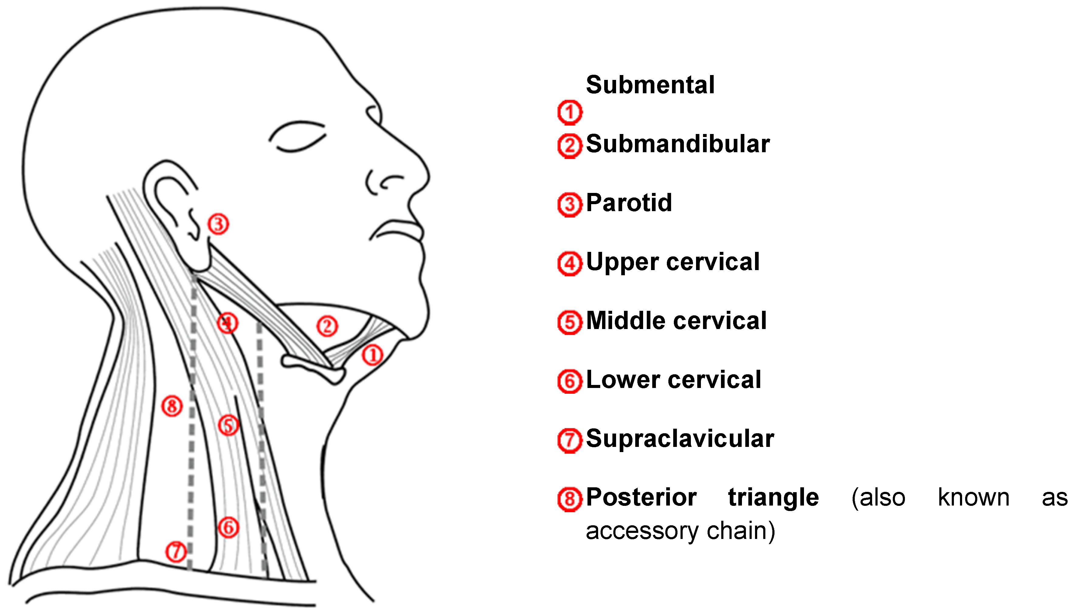 What Specific Region Does The Buccal Lymph Node Drain