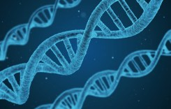 Patentability of naturally occurring DNA