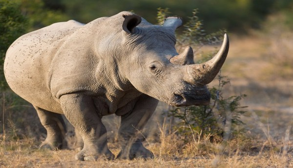 Connected Conservation expands to Kenya to protect local species