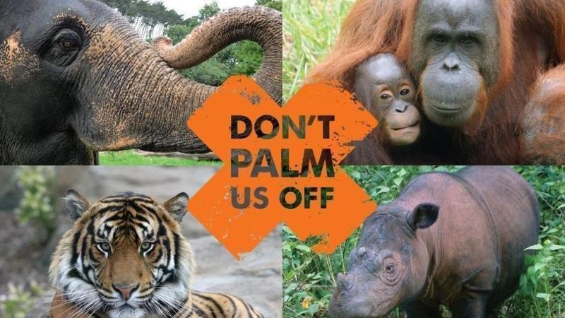 Machen Sie nicht eine internationale Kampagne gegen Palm Us Off, um die Entwaldung als Folge der Palmenindustrie zu stoppen