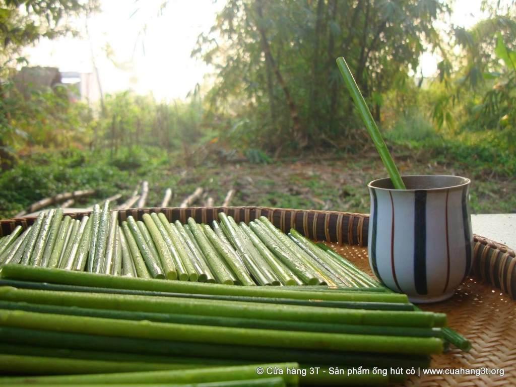 Fresh grass straws