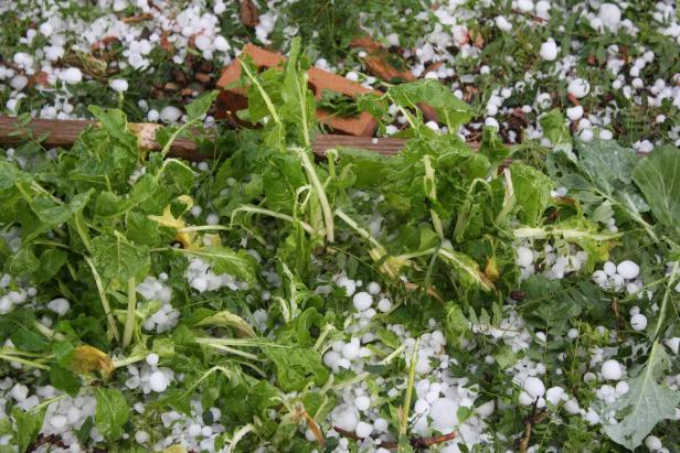 Una tormenta de pedrisco azotó ayer más de 4.000 hectáreas de cultivo en L'Horta Sud y La Ribera Alta