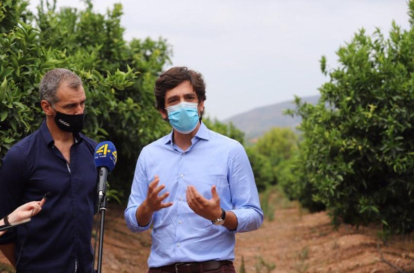 Ciudadanos denuncia ante la Comisión Europea la importación de cítricos con riesgo de contaminación en la UE