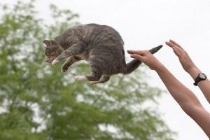 cat_tossing
