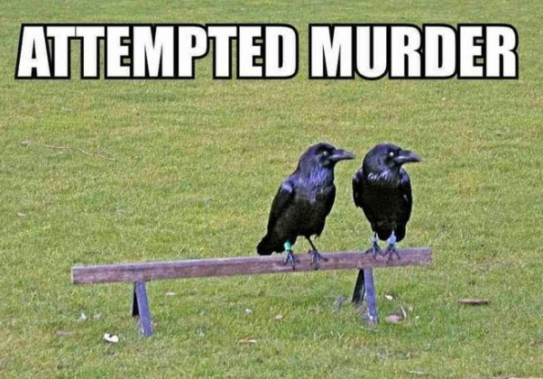 attempted-murder