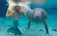 manatee mermaid