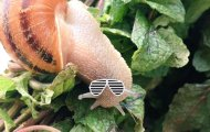 Jeremy the snail