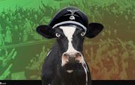 Heck cows