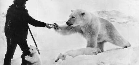 whiskey polar bears