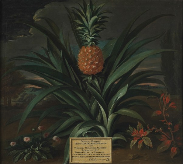 first pineapple to be grown in England. Part of the Pineapple craze of the 18th century