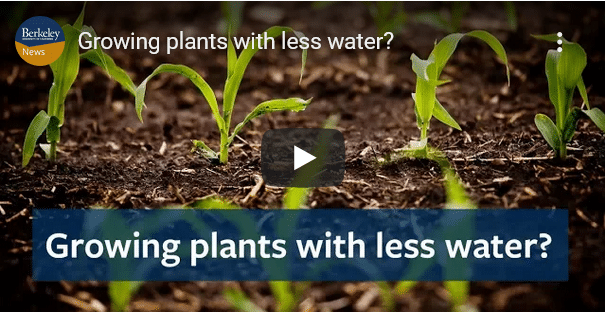 Growing Plants With Less Water?