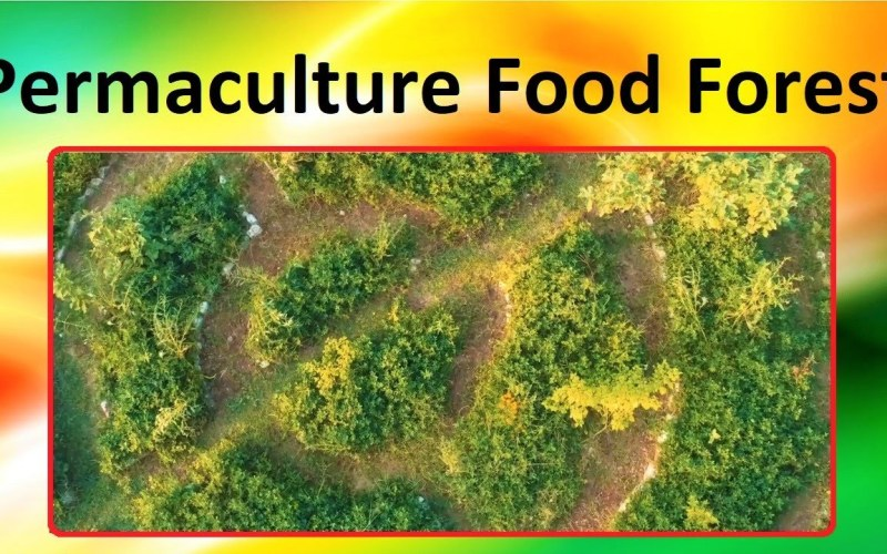 How To Start Permaculture Food Forest – Tips and Tricks For Forest Gardening Off The Grid Gardening