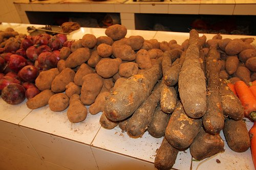 an image showing yams from the Dioscorea Genus