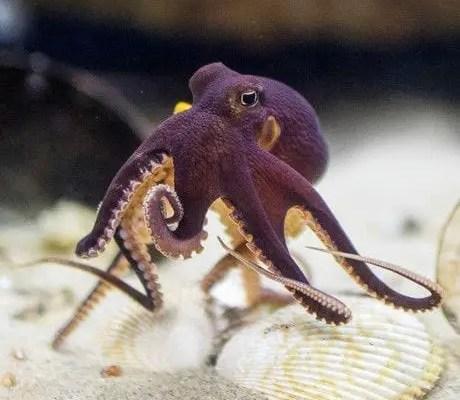 Plural Of Octopus Baby Garden Dumbo