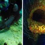 15 Strange Photos Of Sunken Ships (10 Of Weirder Things Underwater)
