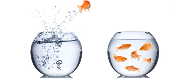 Jumping Out of Your Fishbowl With Interface Recruitment