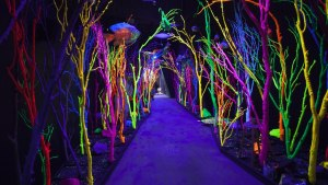 Tunnel of trees at Meow Wolf in New Mexico