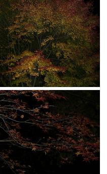 暗闇の紅葉