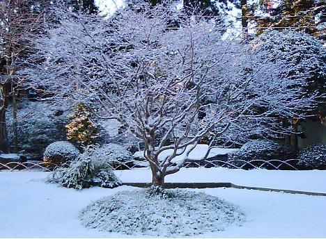 宝石のような雪景色