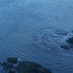 志津川湾の波形