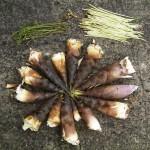 筍・蕗・蕨・たらの芽