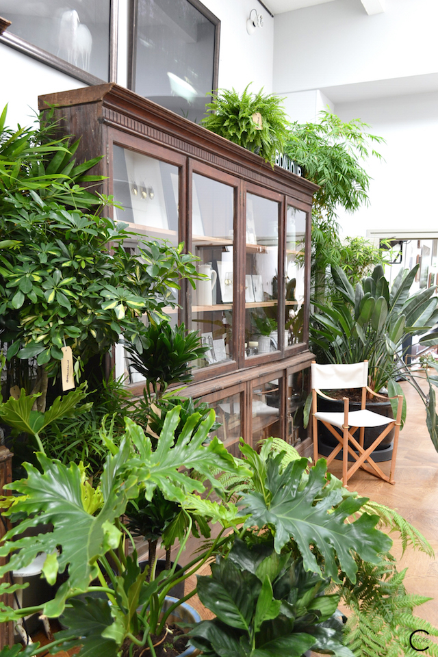The Loft Amsterdam The Playing Circle August 2015 plants urban garden indoor styling vintage