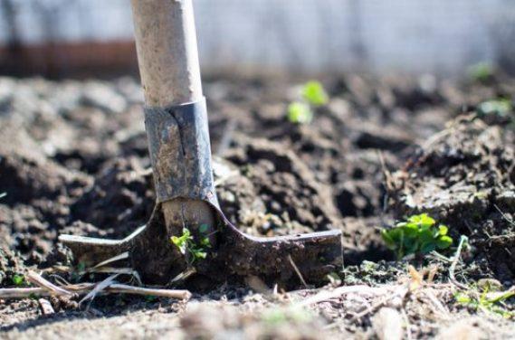 Zelf groente, fruit en kruiden verbouwen voor een duurzame tuin