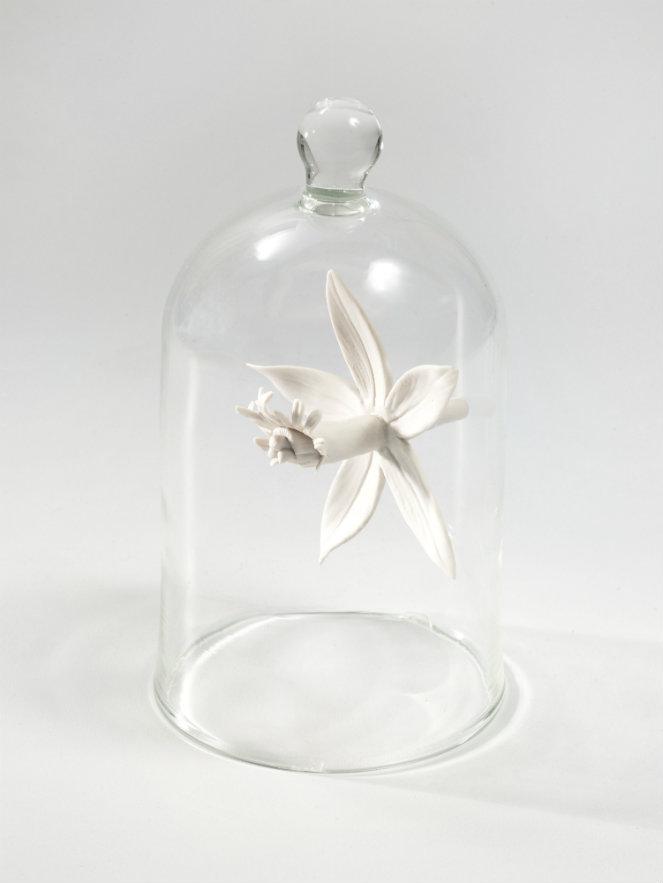 Ana González. Epidendrum. Orquídea hecha a mano con porcelana blanca de Limoges y cúpula de vidrio. 23 x 11 cm de diámetro. 2015. Fotografía: cortesía, galería La Cometa.