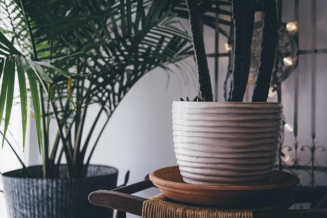 plant-indoor-decor