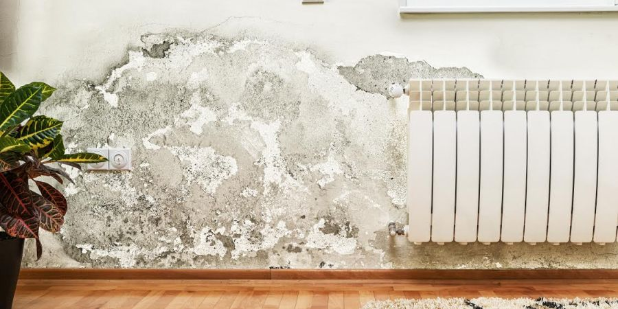remove_mold_mildew_home