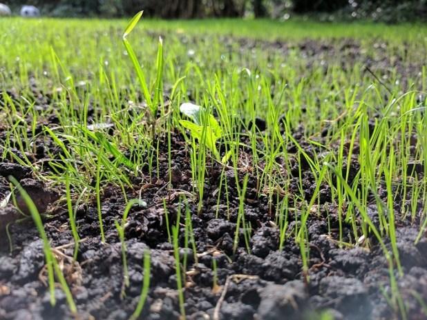 grass-seeds-groom-lawn