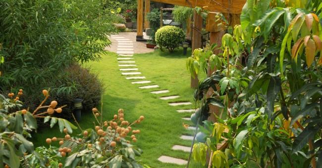 giardino con piante tropicali e vialetto