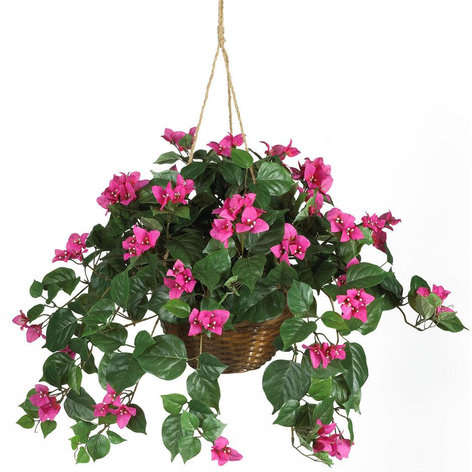 Where Buy Cheap Fresh Flowers