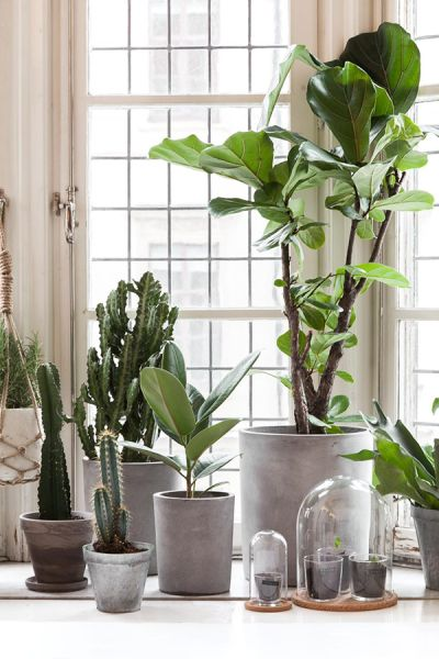 Potted Plants Styles Similarly Colored Pots Painted Concrete Indoor Plant Terrarium
