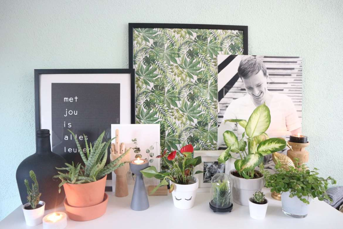 budget diy urban jungle diy
