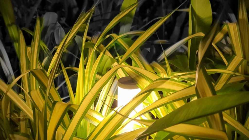 De 3 beste manieren om jouw landschap te verlichten (2)