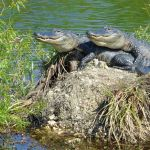Image Courtesy P.Baxter_Florida Everglades NPS