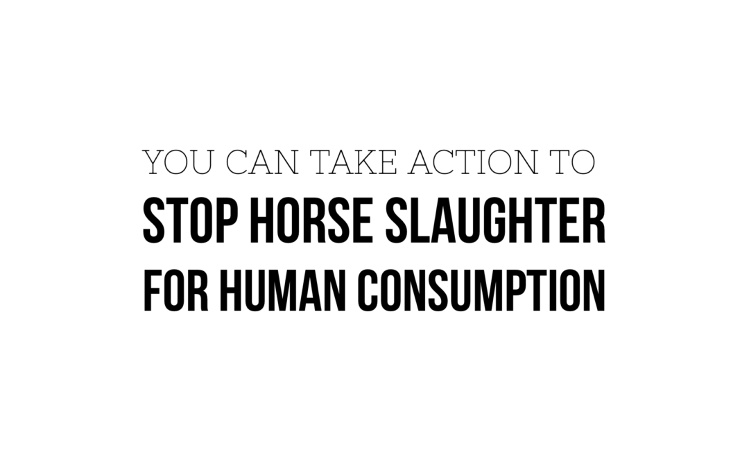 YOU can help STOP horse slaughter for human consumption
