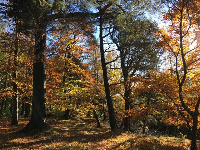 An image of a temperate deciduous forest in Autumn