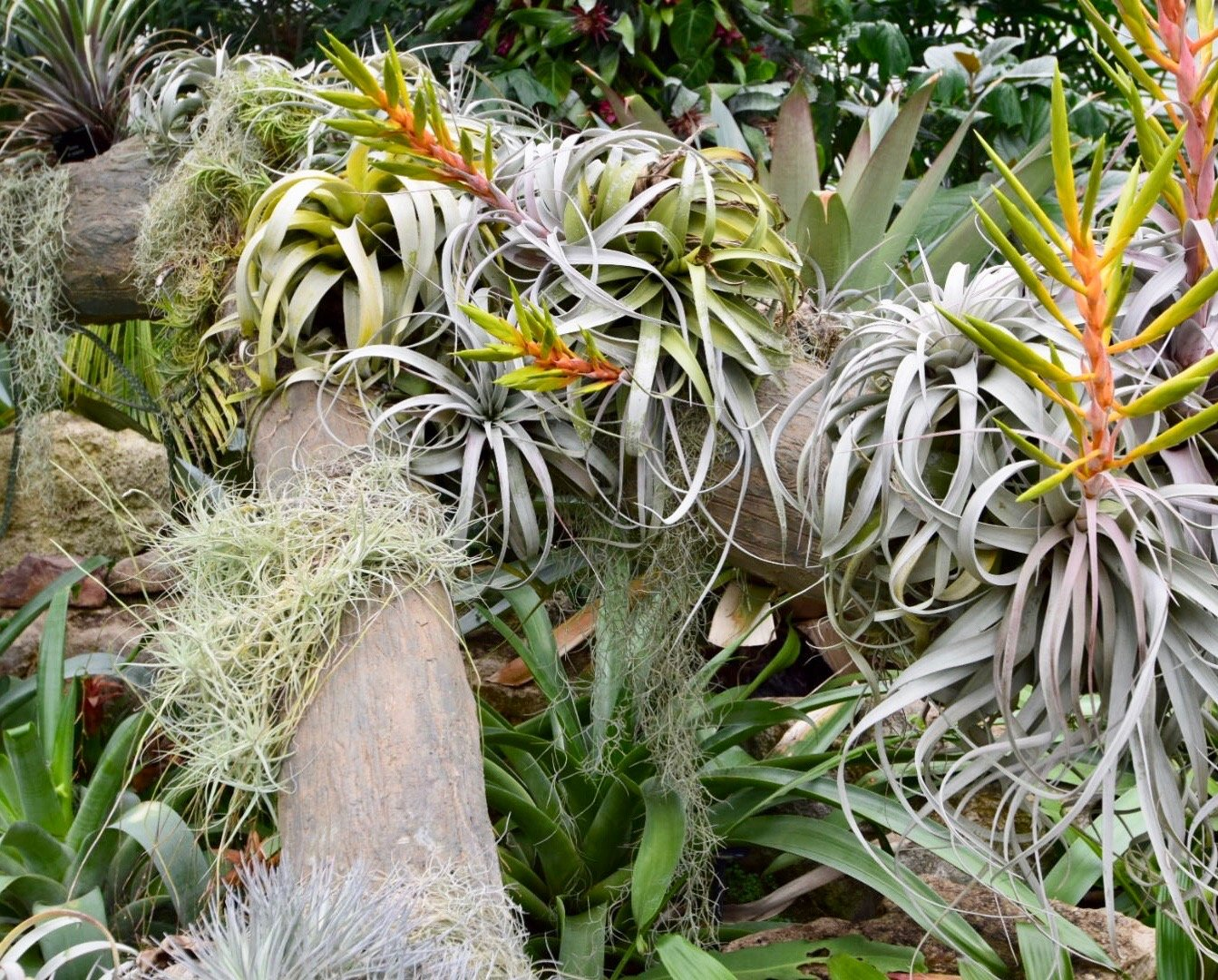 How Has Rainforest Vegetation Adapted To The Climate