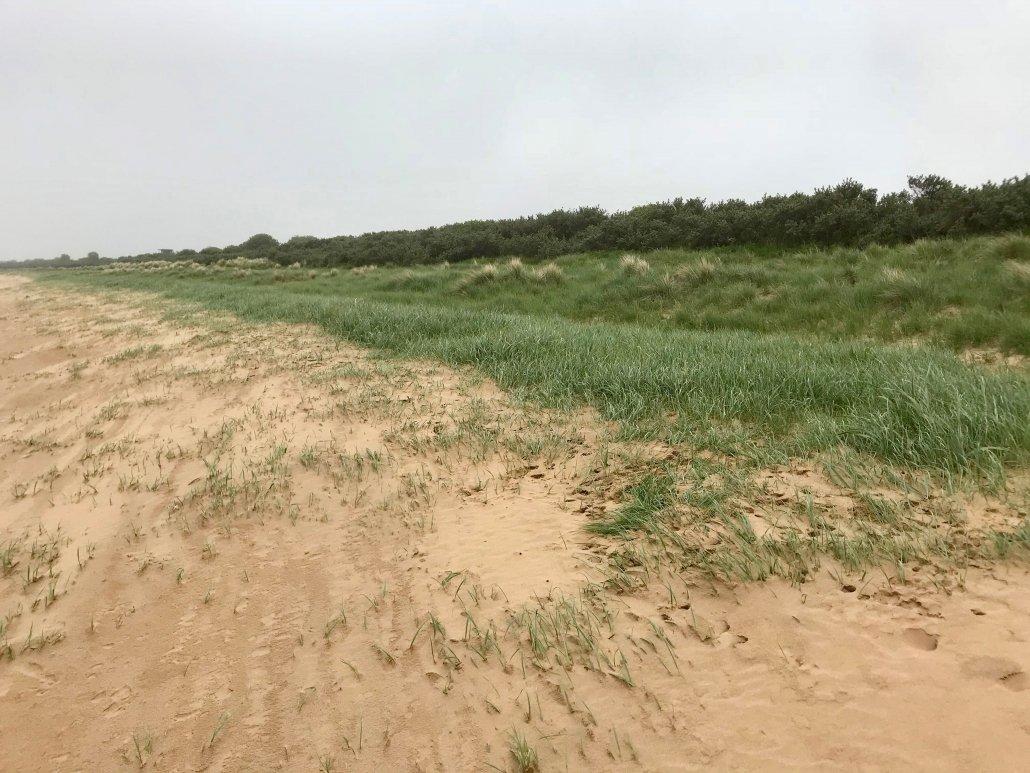 Sand dunes at Donna Nook
