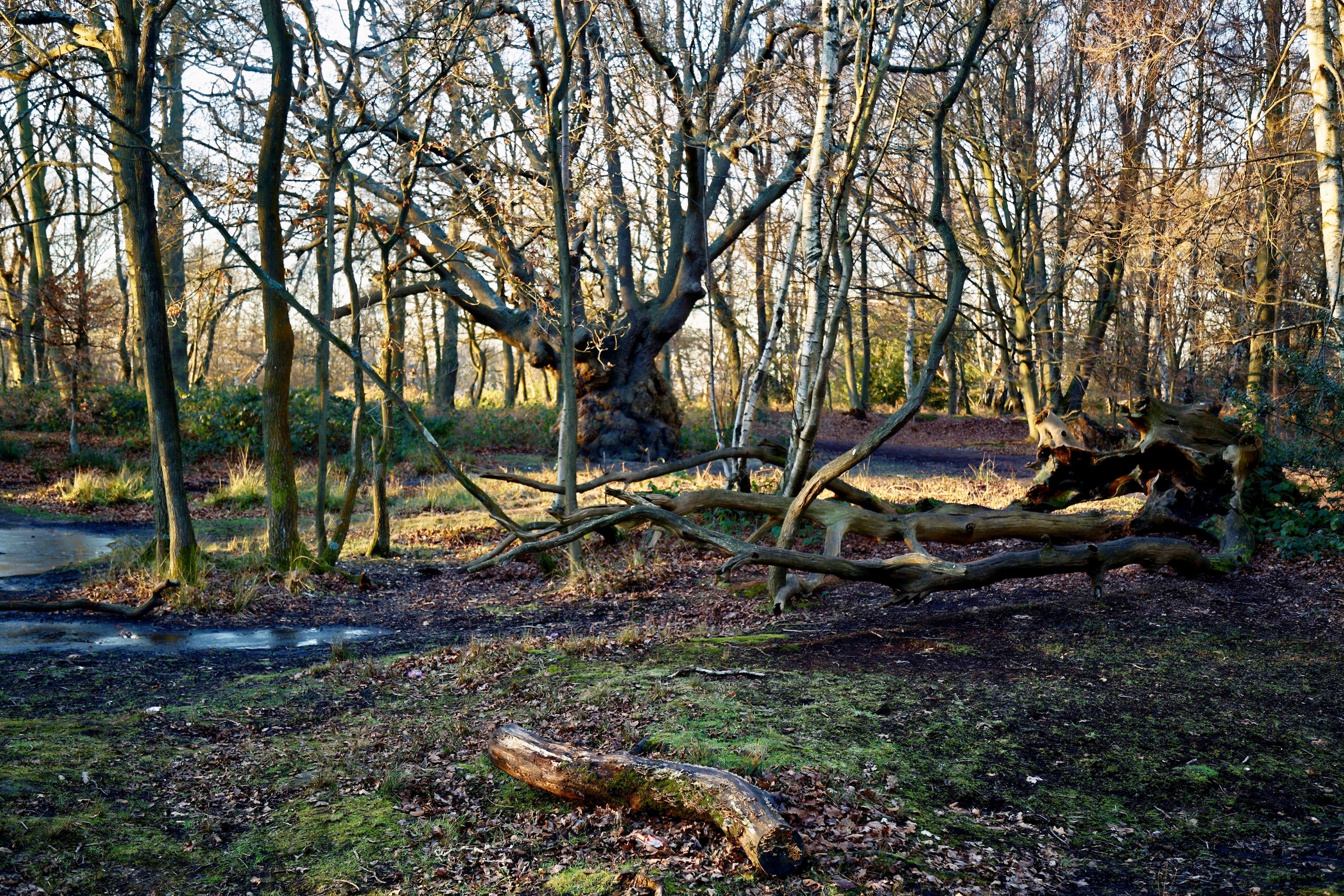 Epping Forest Gcse Coursework