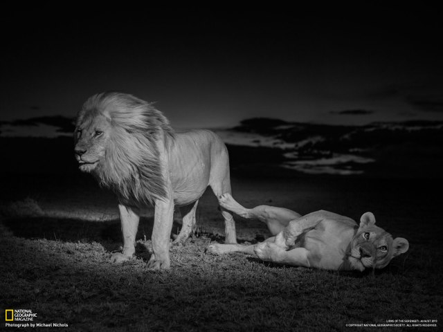 Lions by National Geographic Wildlife Photographers