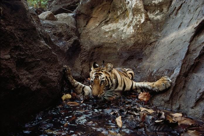 Wild Animals by National Geographic Wildlife Photographers