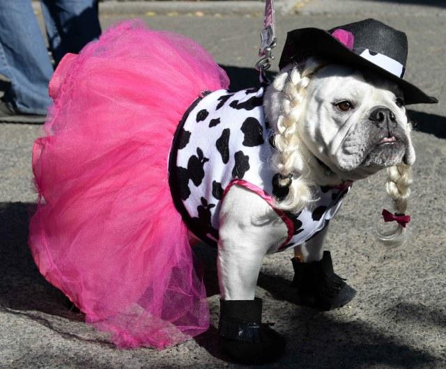 Halloween pets costume _dog