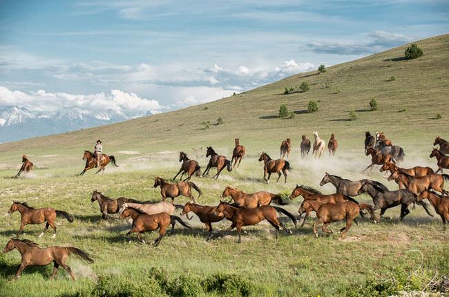 Horses_Ranch_Lifestyle_Zach_Doleac