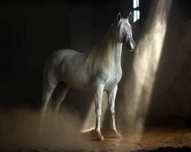 Horses Photography-Wojtek-Kwiatkowski-0